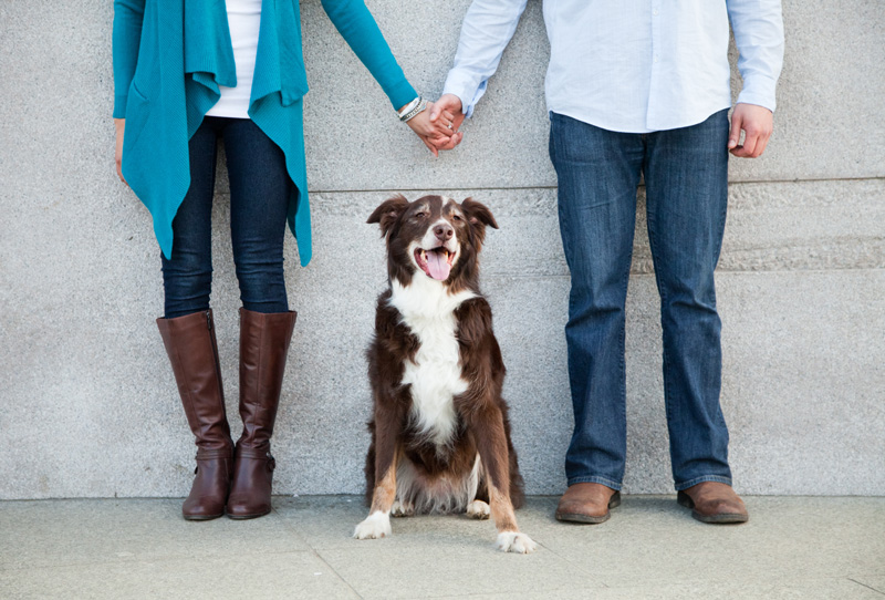 Wedding Photography and Couples Photography, dog sitting between couple holding hands