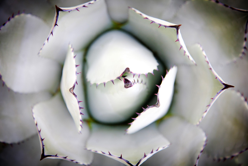 Nature Photography and Details Photography, close up of pale succulent