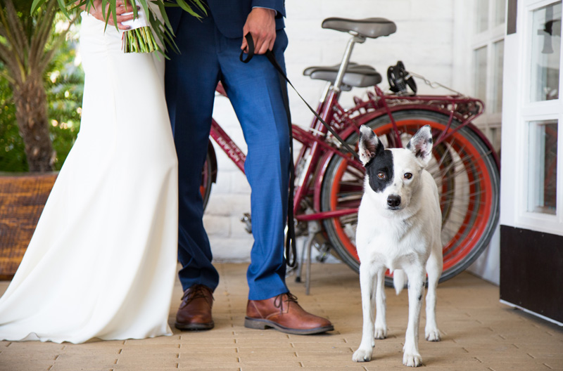 Wedding Photography and Couples Photography, bride and groom with their dog on a leash