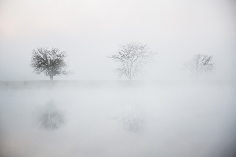 Nature Photography and Details Photography, three trees in thick fog