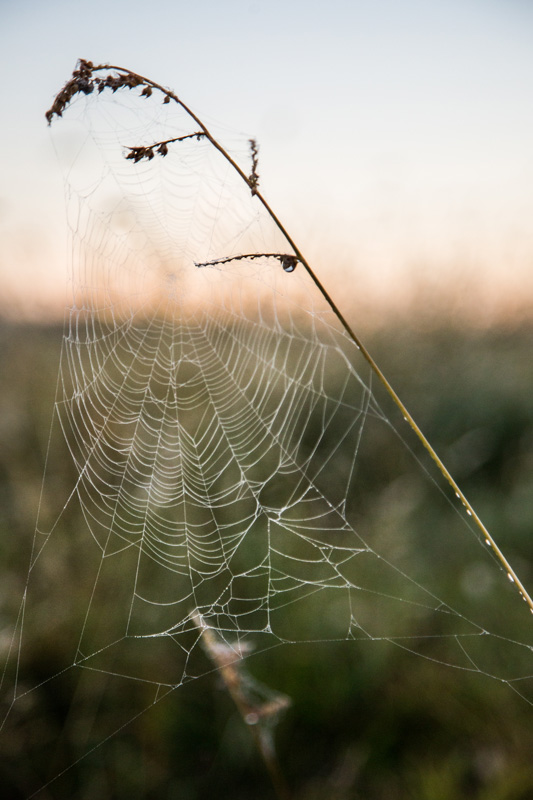 Nature Photography and Details Photography, close up of spider web