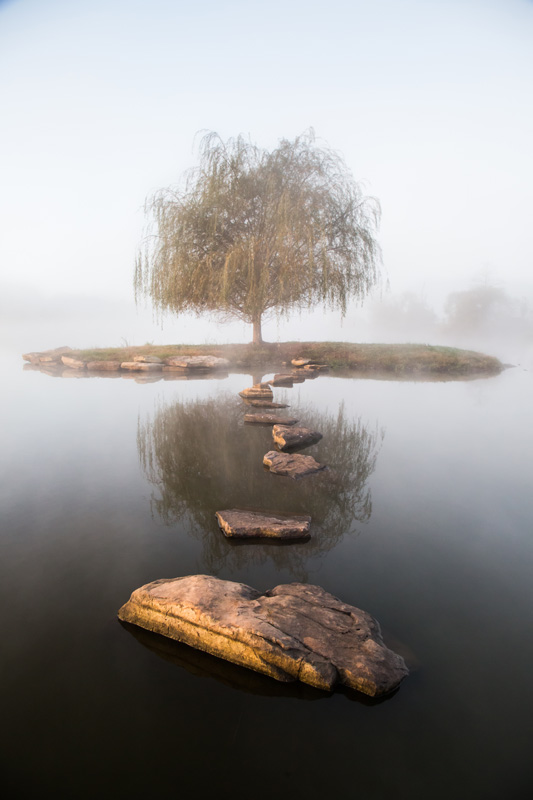 Nature Photography and Details Photography, tree on island in the lake