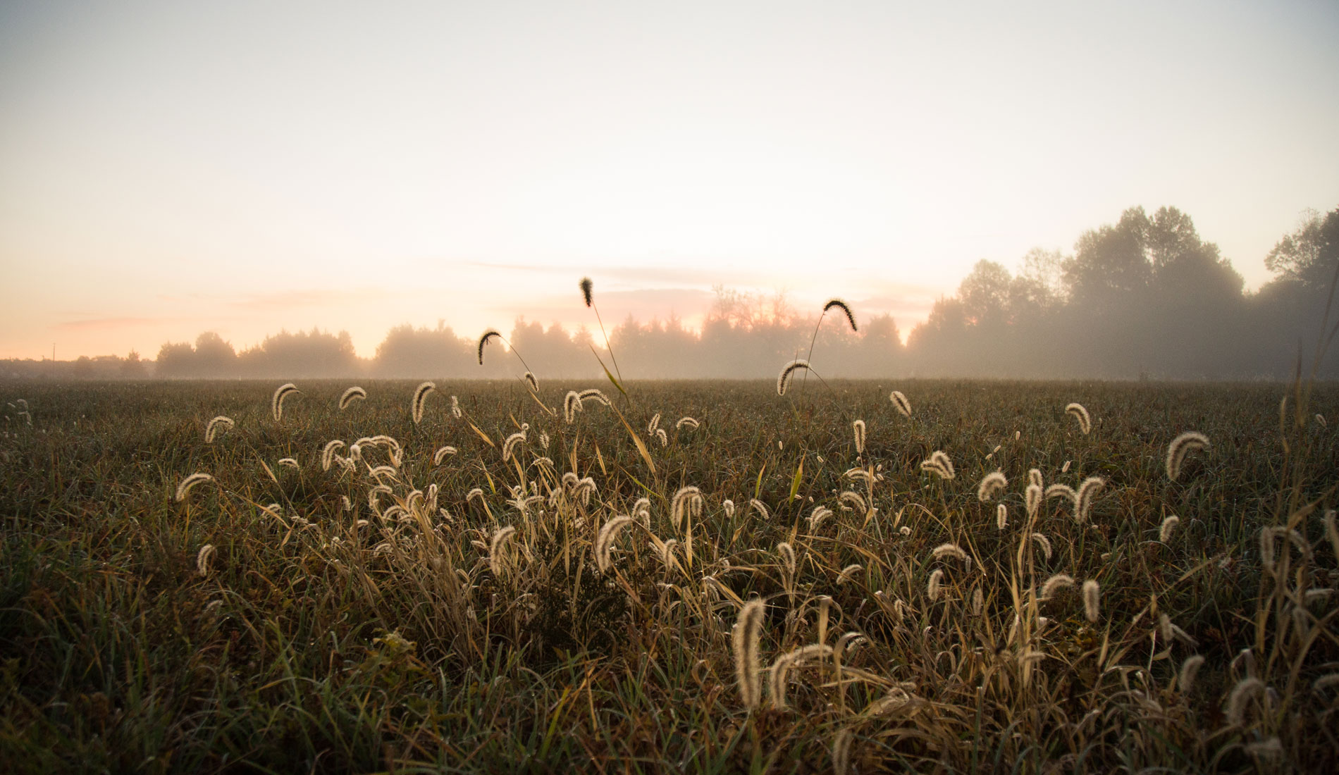 Wedding & Lifestyle Photography, landscape shot of field with tall grass