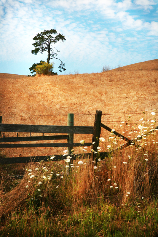 Nature Photography and Details Photography, field with old fence